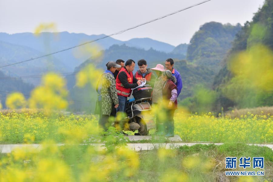 广西融安:驻村工作队助力春播