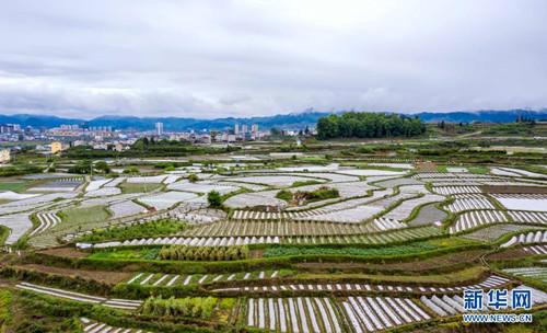 贵州余庆:坝区现代农业建设如火如荼