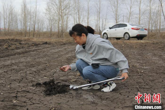 图为孙秀琳在大田查看土壤墒情。 孙凤军 摄