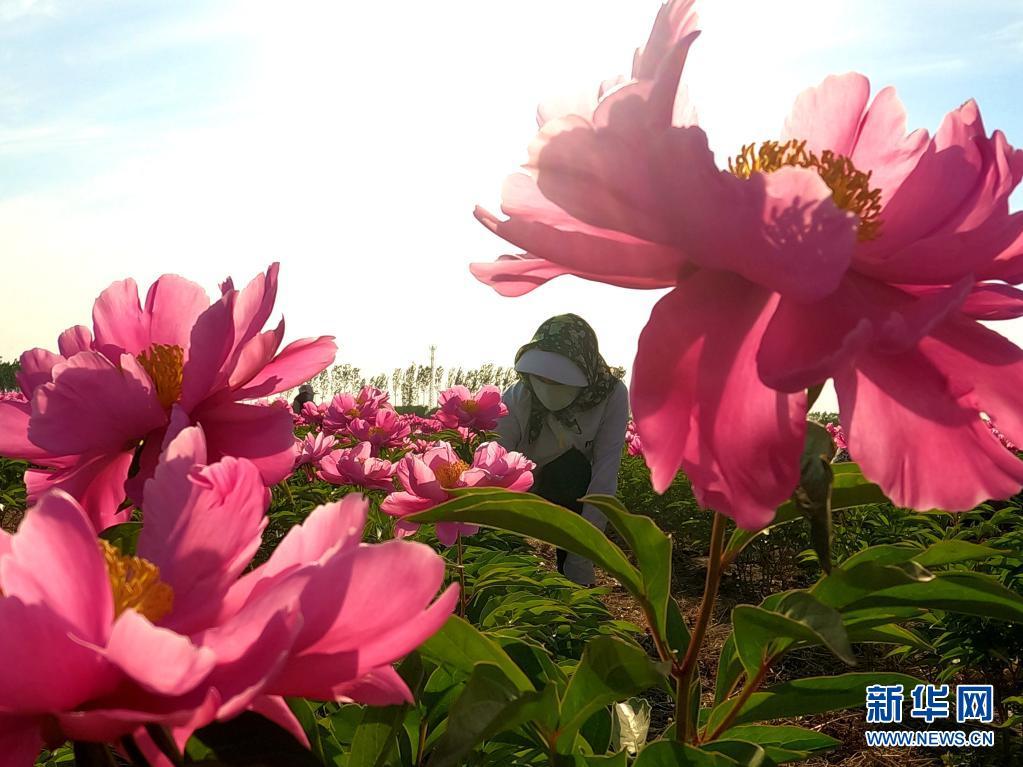 花开致富路